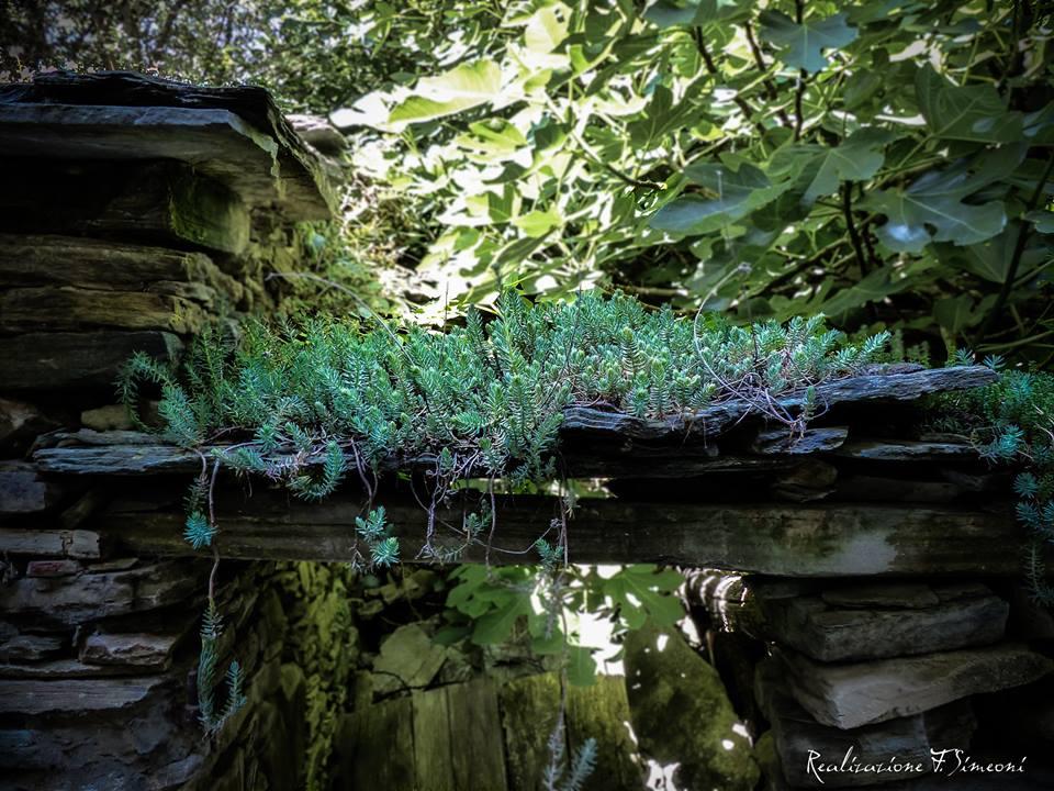 CIPRUNASCU et sa nature verdoyante